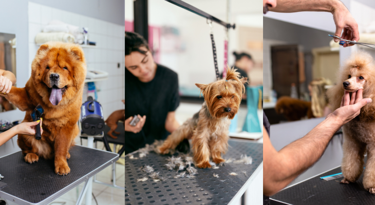 Boost Your Income With Coral Springs Pet Services Company